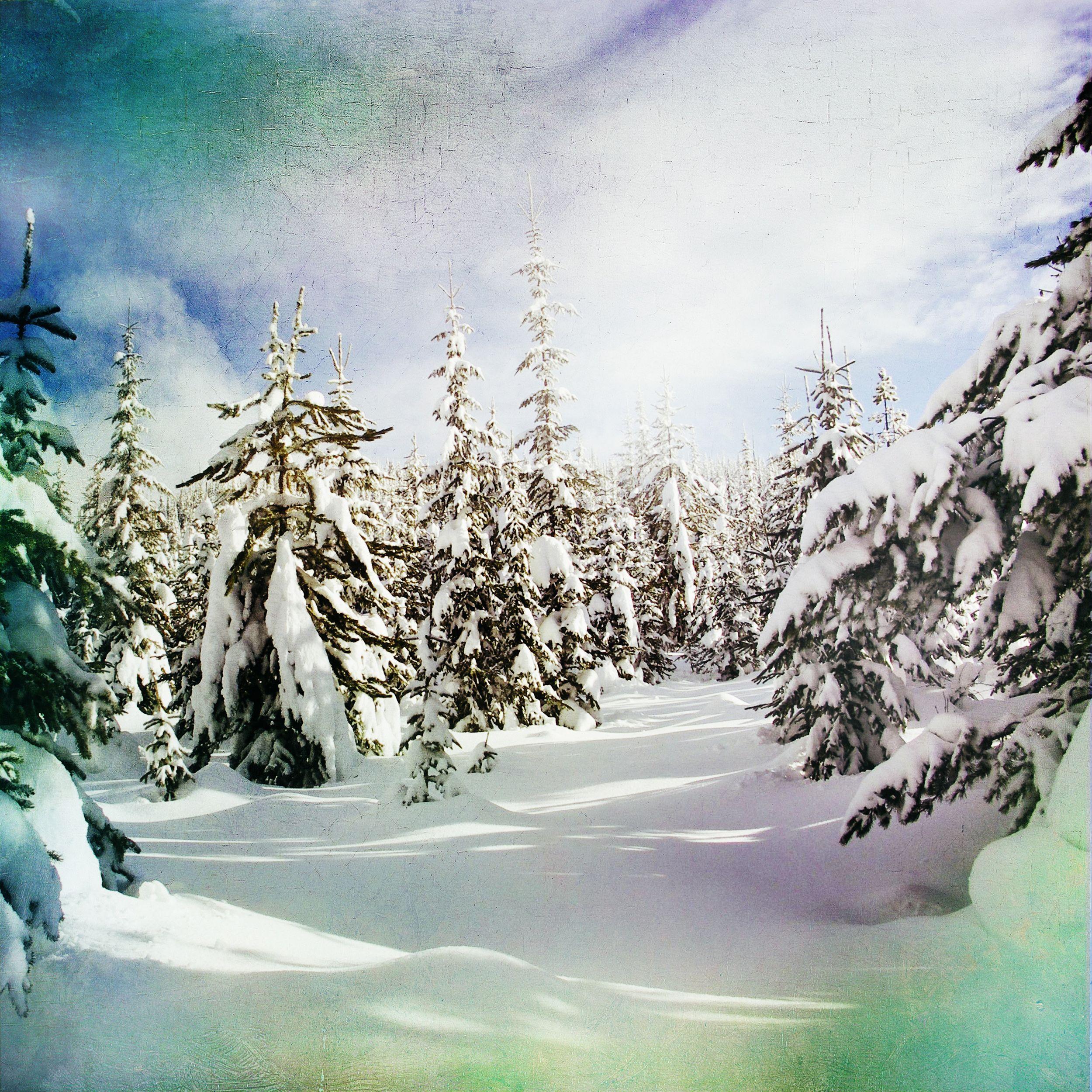 Лиатрис уход на зиму