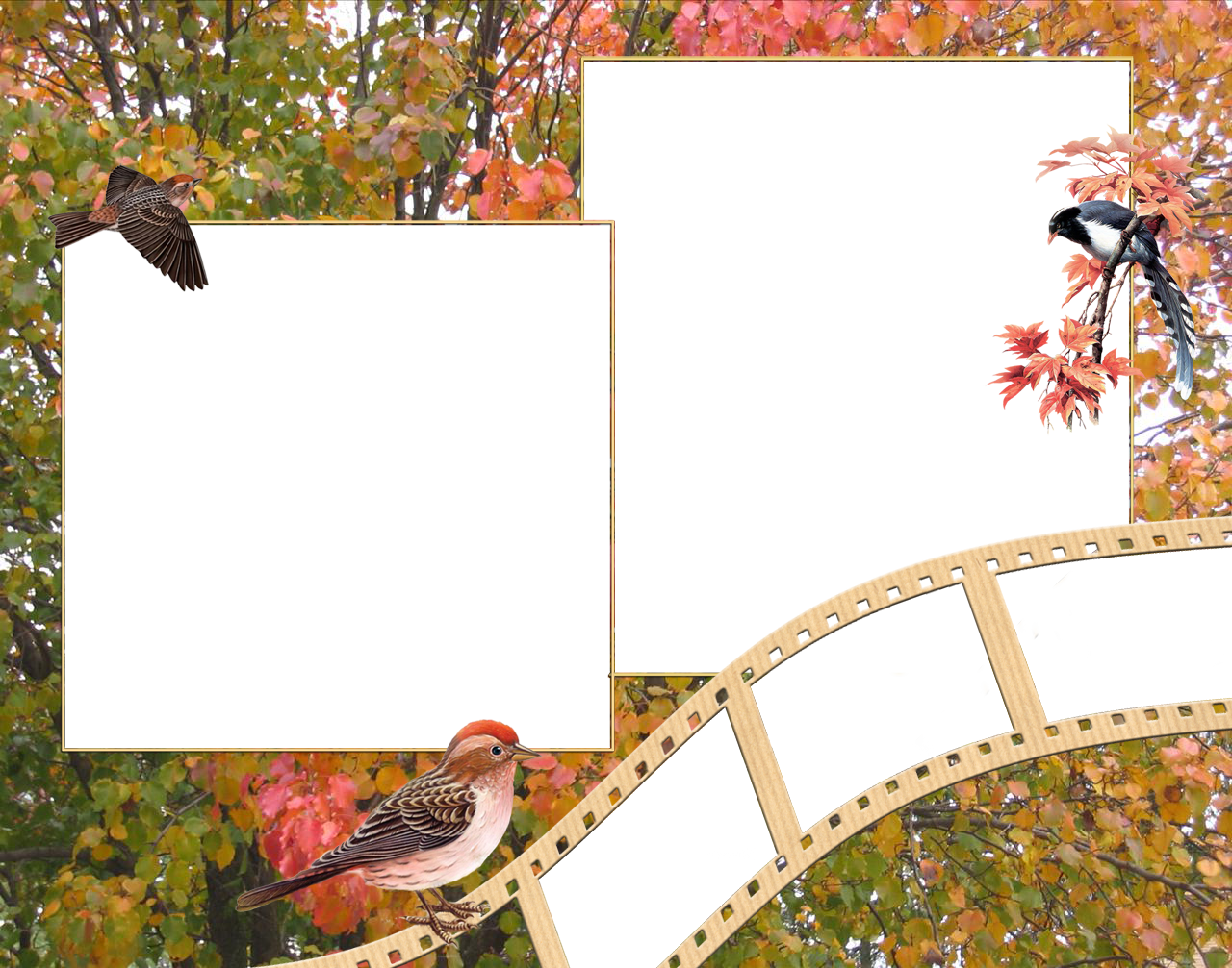 Фоторамка природа картинки